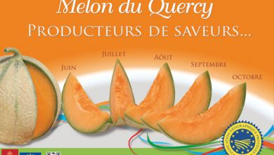 Photo de Envie de Melon ? Le Melon du Quercy bientôt mûr à point !