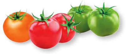 MUTTI Tomates rouges, vertes, oranges