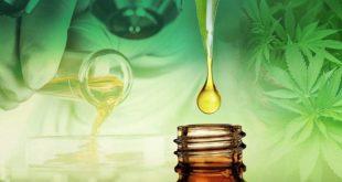 Pourquoi l'huile CBD est bonne pour vous